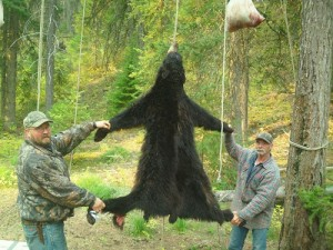 Southfork Outfitters Inc. Wilderness Bear 2012 Montana