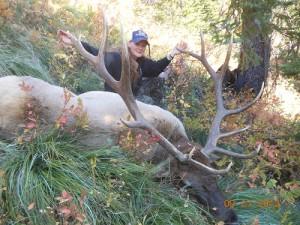 Southfork Outfitters Inc. Wilderness Bull Elk 2012  Montana