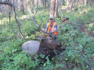 southfork outfitters montana wilderness elk 2013